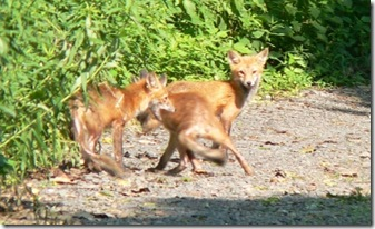 foxFamily_29June